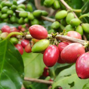 Kaffee aus der ganzen Welt